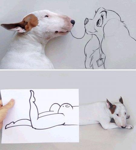 10 Самых прикольных собачьих фотосессий