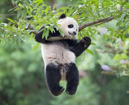 Национальный зоопарк в Вашингтоне отпраздновал первый день рождения панды (8 фото + видео)