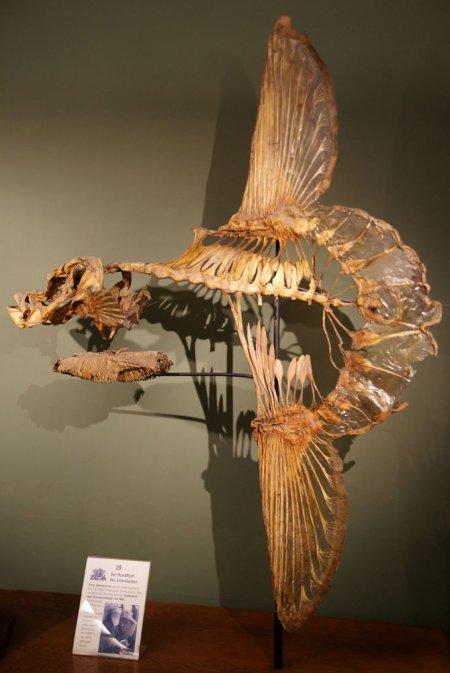 Луна-рыба, одна из крупнейших костных рыб Мирового океана (9 фото)
