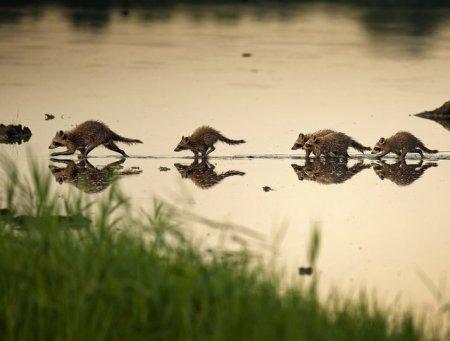 Фотограф Кевин Флеминг находит красоту в дикой природе (9 фото)