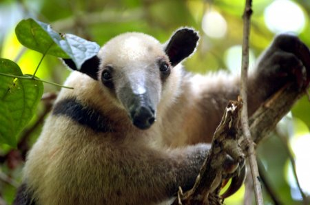 Топ-10 очаровательных животных, которые способны убить человека