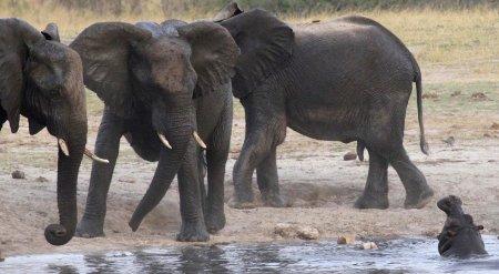 Мир животных в фотографиях (15 фото)