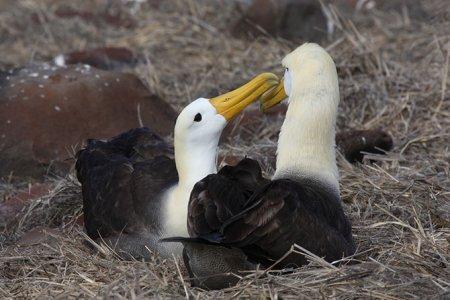 Животные-эндемики Галапагосских островов (18 фото)