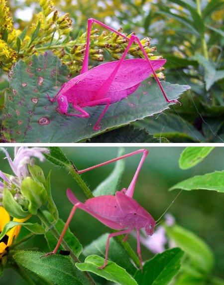 Животные с необычной расцветкой (20 фото)