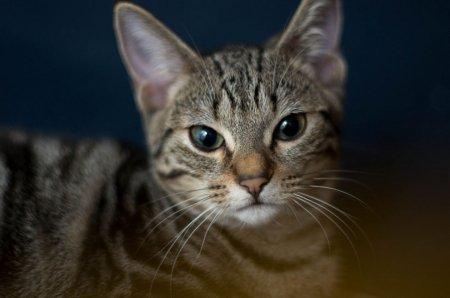 Кошки самых красивых пород (11 фото)