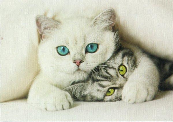 Чем вывести запах кошачьей мочи