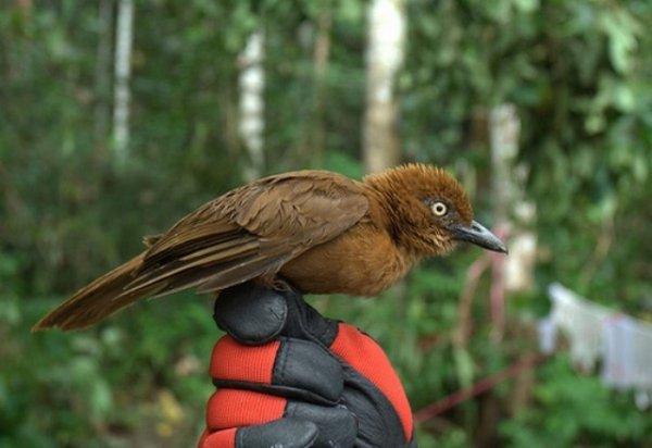 Ядовитые птицы, которых лучше обходить стороной (8 фото)