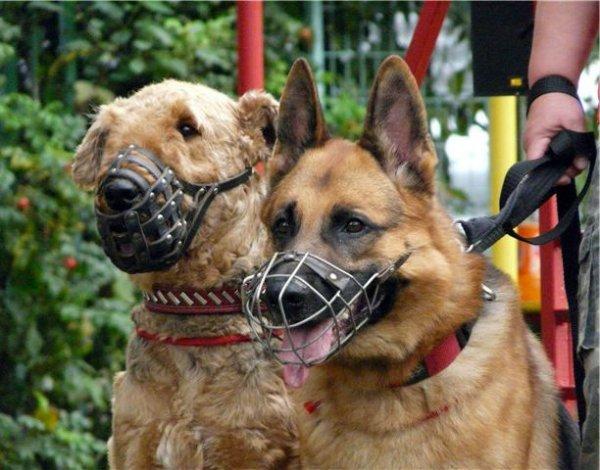 Разновидность амуниции для собак
