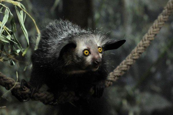 10 самых удивительных животных