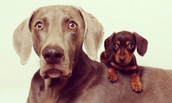 Собачья дружба (10 фото + видео)