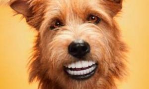 Зубные протезы для собак