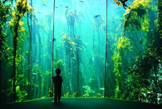Как аквариум в доме влияет на здоровье человека