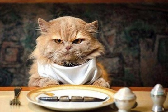 Питание для животных