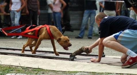 Самые популярные виды спорта для собак