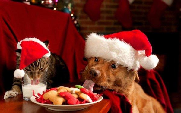 Подарки для животных (14фото)