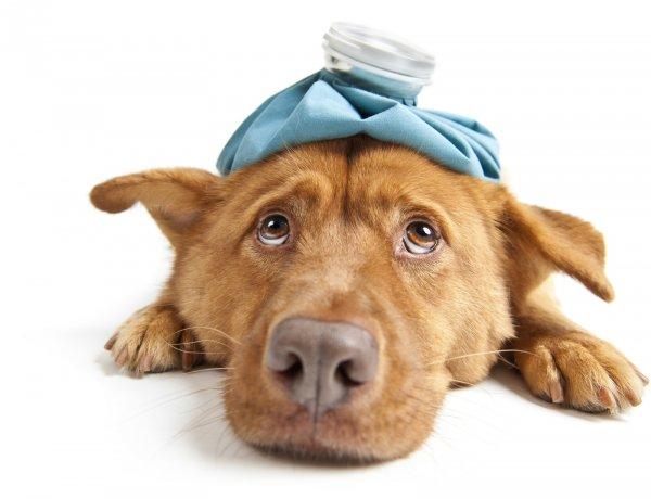 Основные поводы для обращения в ветеринарную клинику