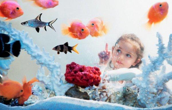 Как правильно выбрать аквариум