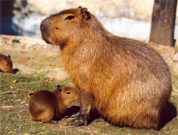 Самые необычные домашние животные
