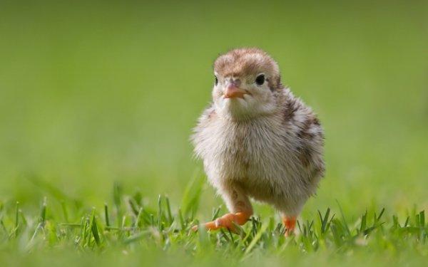 5 распространенных мифов о животных.