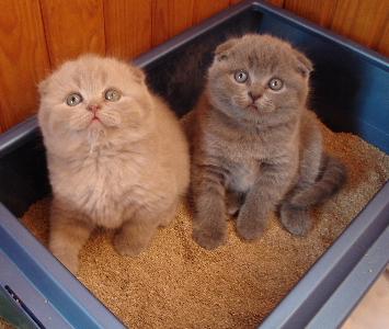 Жизнь с кошкой: чем наполнить туалет?