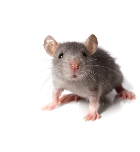 Не будите в мышке зверя