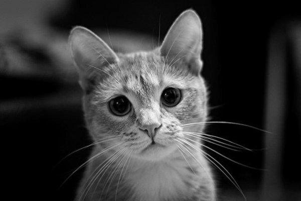 Почему грустят животные?