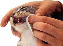 Как чистить кошке зубы