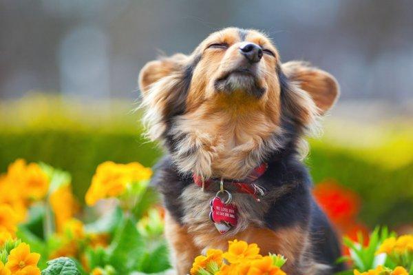 Как выбрать ошейник для собаки