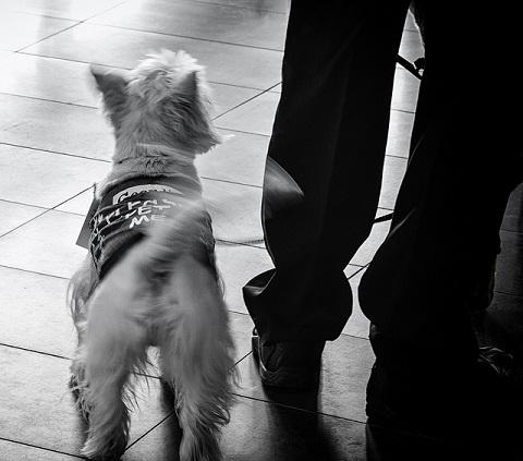 Как определить настроение собаки по вилянию хвоста
