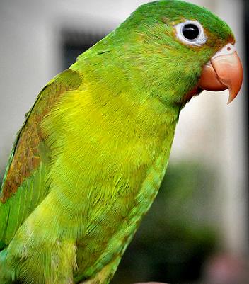 Как правильно ухаживать за попугаями