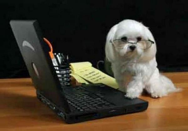 Собаки и техника
