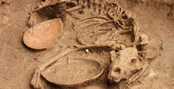 Ученые палеонтологи обнаружили останки доисторических собак