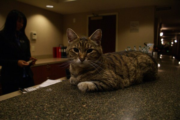 Оформляем кота в отель Kot-Begemot Hotel