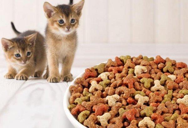 Здоровый рацион кошек